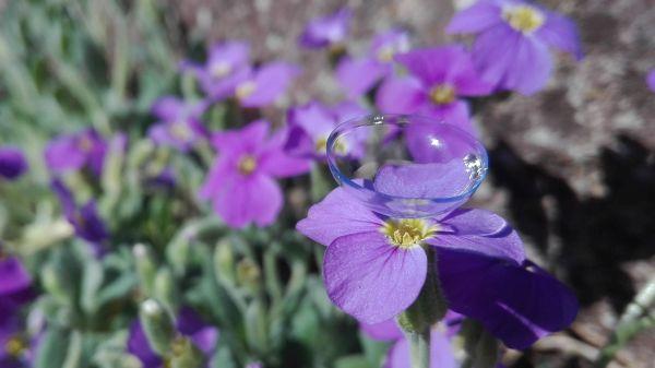 Kontaktlinsen formstabil und weich